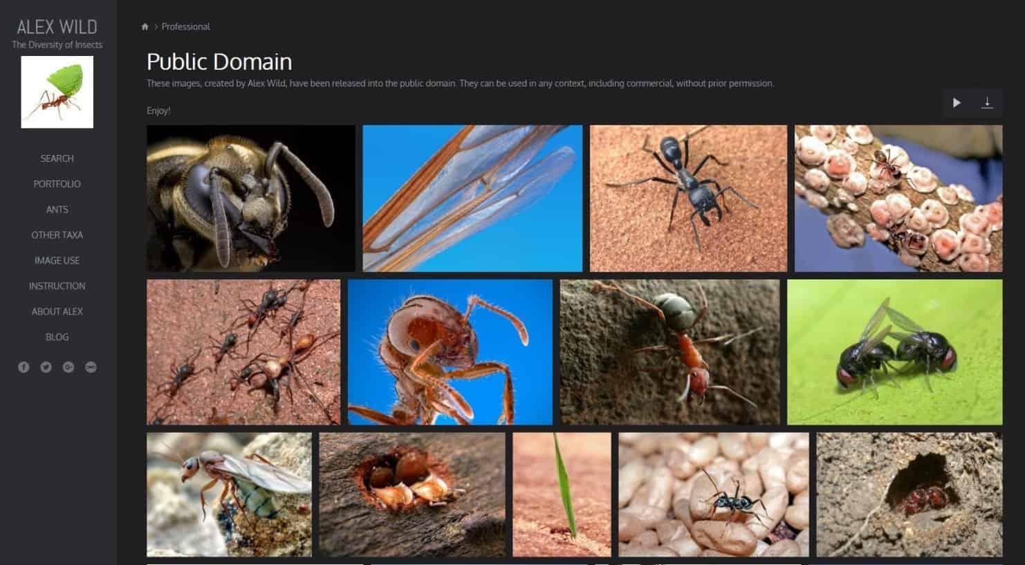 Website Tempat Download Gambar Gratis Untuk Blog Alexander Wild